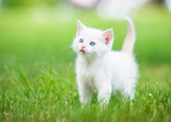 Tips On Training Your Cat Contests You Shouldnt Forget to Enter Tử vi tuần mới 28/9 - 4/10 năm 2020 của 12 con giáp